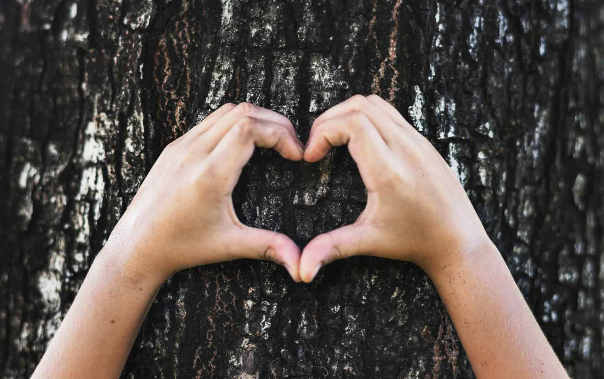 Eco friendly heart shaped hands around tree